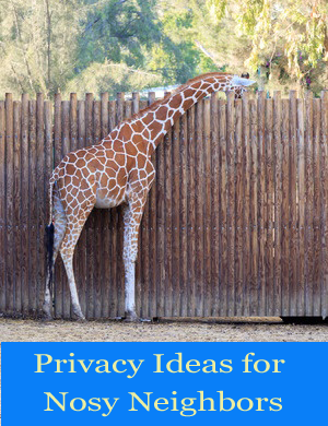 Pool Privacy Ideas modern pool fence ideas pictures Four Practical Pool Privacy Ideas